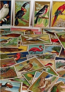 Mecca Cigarette / Tobacco Cards - Bird Series